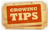 growing_tips