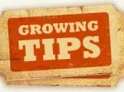 growing_tips
